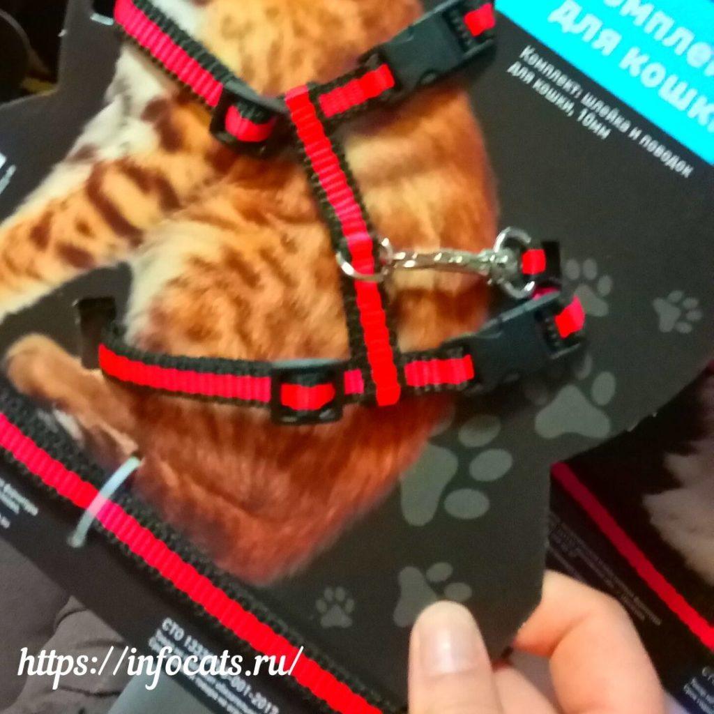 +как выбрать шлейку +для кошки правильно +как выбрать шлейку +для кошки +по размеру какую шлейку выбрать +для кошки +как выбрать шлейку +для кошки как правильно выгуливать кошку на шлейке как правильно надевается шлейка на кошку правильная шлейка для кошки