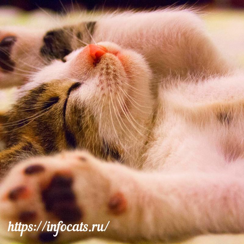 кошки, кот, коты, кошка, животные, котята, мурлыканье, домашние животные, питомцы, мурлыканье кошки, мурчание, cat, котенок, кошачий язык, мурлыкают, animal, кошачье мурлыканье, факты о кошках, cat (animal), релакс, кошка мурлыкает, asmr, домашнее животное, мурлыкание, кошатники, animals, котики, видео о кошках, кошка счастлива, релаксация, kitten, purr, мурчание котов, звуки природы, мурлыкает кошка, кошка трется головой, смешные кошки, почему, общение с кошкой, мурчит, видео про кошек, асмр, кошка медленно моргает, мур, урчание, смешные коты, приколы с котами, как понять кошку, породы кошек, хозяева кошек, кошачьи повадки, кошачьи усы, кошачье чувство равновесия, жесты кошки, кошачьи жесты, инстинкты, жизнь с котом, владелец кошки, кошка дерет мебель, кошка мнет лапами, пикабу, кошка мурлычет, львы, кошка показывает живот, жизнь с питомцем, любители кошек, советы о кошках, голос кошки, как понять кота, хочу все знать, взрыв мозга, кошка урчит, мурлычат, урчат, мурлыкает, cats, relax, кошачье мурчание, мурчание кота, funny cats, расслабление, кошачьи, мурчит кошка, почему мурлыкает кот, почему мурлыкают коты, почему мурлыкают кошки и коты, тигры, почему мурлыкает кошка, мурлыкает кот, мурчит кот, мурлыкание котов, мурчат коты, мурлыкают коты, и, жизнь с кошкой, пушистые, наука, почему мурлыкают кошки, лечебные звуки, медитация, приколы коты, животных, животный мир, про животных, интересные факты, лечебное кошачье мурлыканье, прикольные котики, потрясающие факты adme, музыка для души, удивительные факты, фотография, кошачье мурлыканье для сна, лечебное кошачье мурлыканье для сна, meditationmus, кошачье мурлыканье слушать, кошачье мурлыканье слушать онлайн, факты о кошках которые стоит знать, вдохновение, художники, факты о кошках которые вы не знали, арт-проекты, факты о животных, леченье, мейн-кун, домашние любимцы, почему кошки всегда приземляются на лапы, как видят кошки, лечебное мурлыканье кошки, почему кошки мурлыкают, человеческое здоровье, лапки, коготки, де
